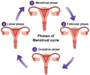 Absence of menstrual periods