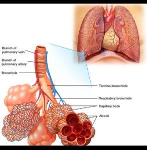 Ayurvedic Ashtma Treatment